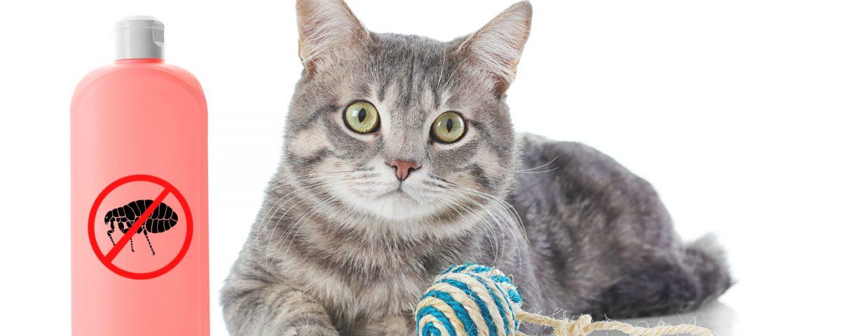 anti-tiques pour chat