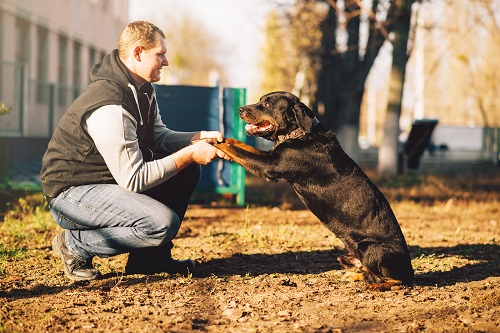 comportementaliste canin en Haute Loire