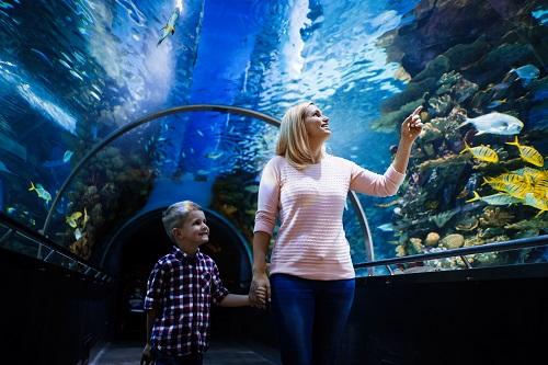 Guide d'achat d'un aquarium à Nice
